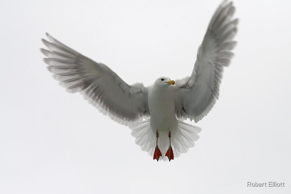 The Ballerina  ~ Glaucous-winged Gull by Robert Elliott