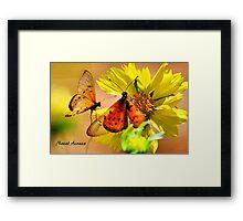 BUTTERFLY SERIES - Natal Acraea Framed Print