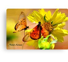 BUTTERFLY SERIES - Natal Acraea Canvas Print