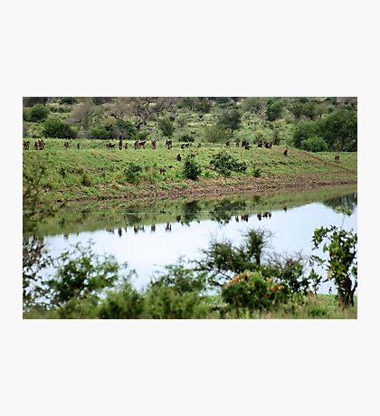 BABOONS in LANDSCAPE SILHOUETTE Photographic Print