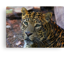 Leopard Painted Canvas Print