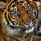 The Eye of the Tiger by Alistair Wilson