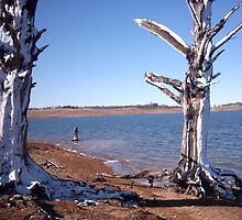 """Snowy Trees"" at Lake Eucumbene (Old Adaminaby) by eucumbene"