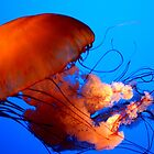 Jellyfish by Hilary Walker