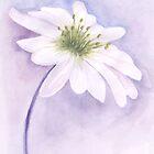 Lilac by Rashmita & Raj
