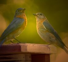 Life with the Bluebirds in 2009 by Bonnie T.  Barry