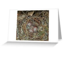 Mama's Nest Greeting Card