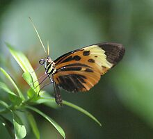 Butterfly #3 – May 2008 by wonderfulworld
