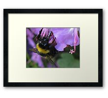 Sipping Nectar Through a Straw Framed Print