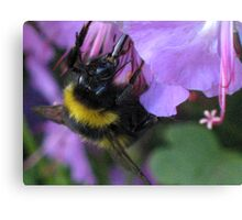 Sipping Nectar Through a Straw Canvas Print