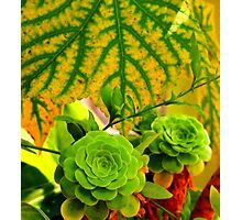 Greens and Oranges Photographic Print
