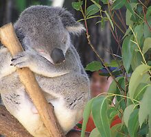 Sleepy Koala by Felicia Moore