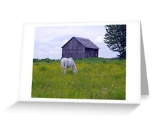 Buttercups Lover Greeting Card