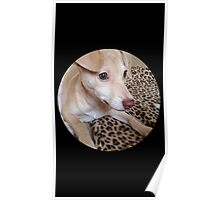 """Our Greyhound,Chihuahua Mix Puppy """"Honey Bun """" Poster"""