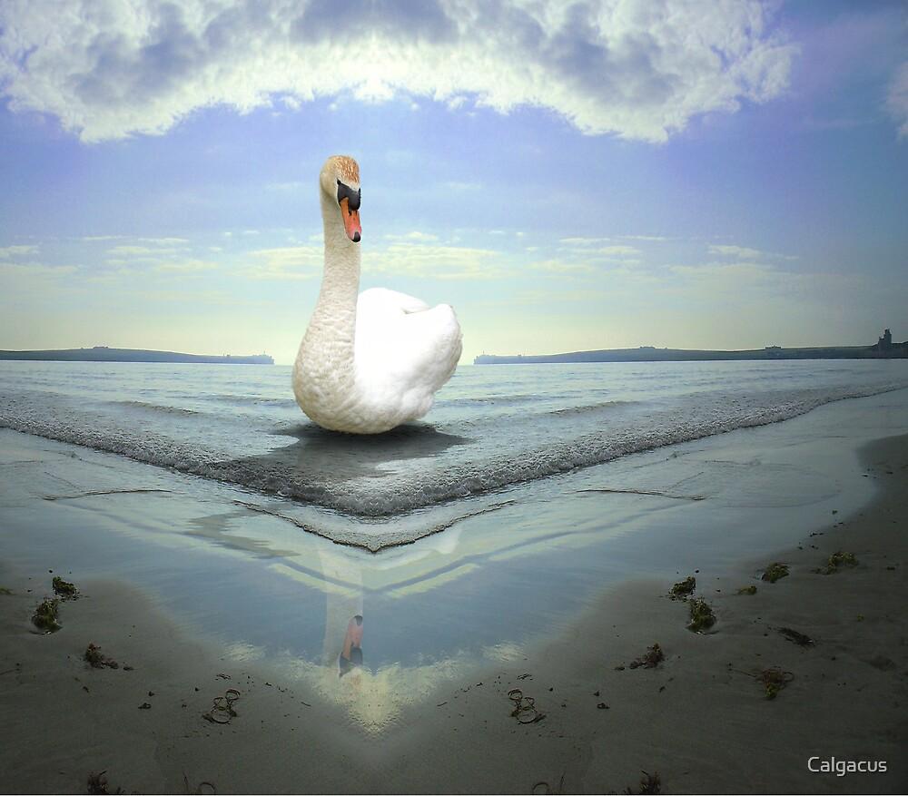 Swan Lake by Calgacus