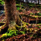 Moss Tree by Scott Ward