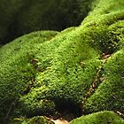 A Mossy Bank. by Billlee