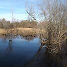 Wetlands, New York Botanical Garden, Bronx, New York by lenspiro
