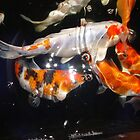 Koi 2 by May Lattanzio