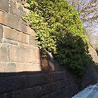 Harsimus Stem Embankment, Snow View, Former Pennsylvania Railroad Embankment, Jersey City, New Jersey  by lenspiro