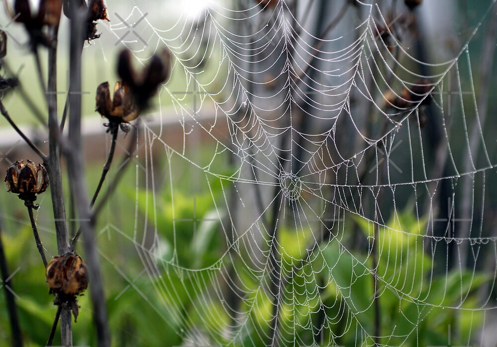 The Web by mikrin
