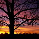 Sunrise Silhouette by Pamela Hubbard