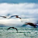 'on the wing' by Lisa Wilson
