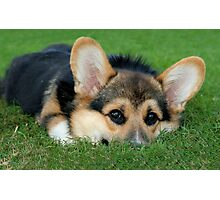 Peeking Corgi Photographic Print