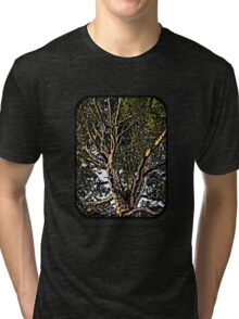 Sunshine in a Eucalypt tree Tri-blend T-Shirt