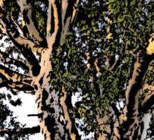 Sunshine in a Eucalypt tree Sticker