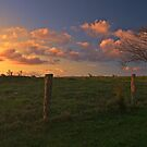 Maleny Sunset by Ben Messina