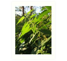 Nettle in the forest Art Print