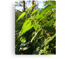 Nettle in the forest Canvas Print