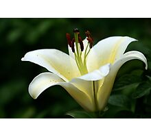Shining Lily Photographic Print
