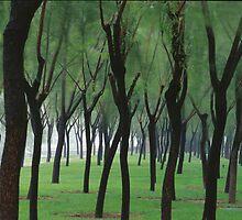 Rainy by maka1967
