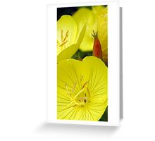 Yellow Cups... Greeting Card