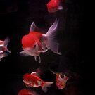 Black Goldfish by Elaine Li