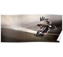 Desert Eagle Poster