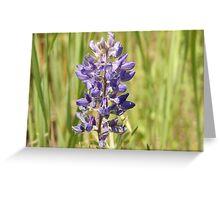 Wildflowers of Eastern Washington Greeting Card