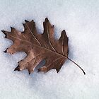 Leaf on Snow by John Wright