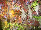 Explosion of Fall Colors © by Mary Campbell