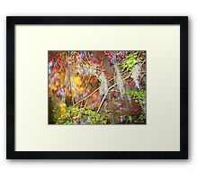 Explosion of Fall Colors © Framed Print
