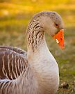 Goose by Mary Campbell