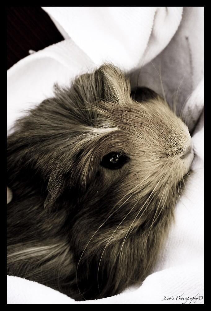 Pet Hamster by Stephen Joso