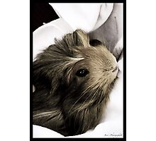 Pet Hamster Photographic Print