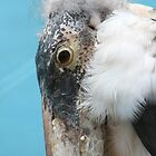 Malibu Stork by Tawny