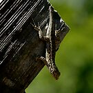 LizardWizard by NIC1D