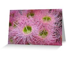 Pink Flowering Gum Greeting Card