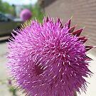 Purple thorn by David owens