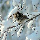 Snow Bird by Paul Gitto